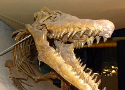 Foto-Fossielen-mosasaure